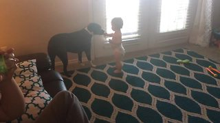 Little girl shares snacks with her favorite doggy