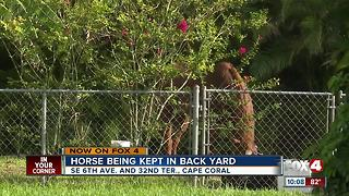 Horse kept in Cape Coral backyard sparks concern - Video