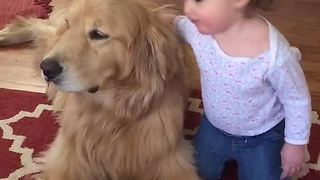 Precious Golden Retriever delivers kisses to baby - Video