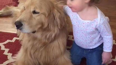Precious Golden Retriever delivers kisses to baby