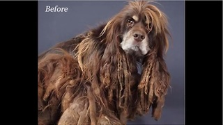 Puppy Mill Survivor Goes Through Incredible Transformation - Video