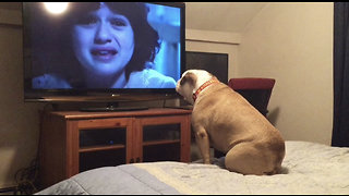 Bulldog Watches A Horror Movie, Does Something INCREDIBLE During Scary Scene - Video