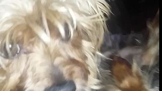 My two dogs fall in love with each other  - Video