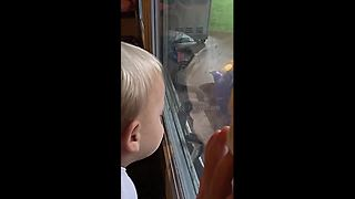 Confused toddler doesn't know if snake is a 'dragon' - Video