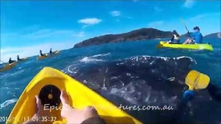 Injured Whale Approaches Kayakers for Help - Video