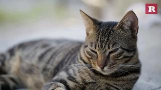 Quit your job and cuddle cats | Rare Animals - Video