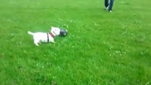 World Cup-loving dog shows off soccer skills - Video