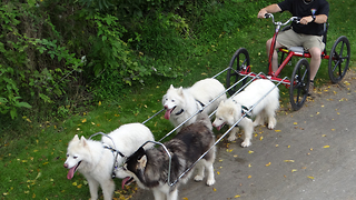 Fun Dog Training iMovie Trailer - Video