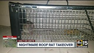Roof rats crawling inside woman's walls in Scottsdale - Video