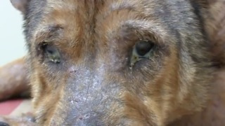 Dogs rescued from abusive owner get second chance - Video