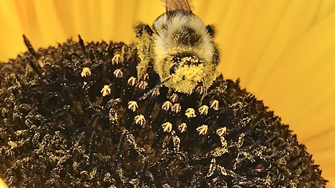 Do you know how bees carry pollen?