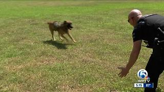 Police equipped to save K9s from opioid exposure - Video