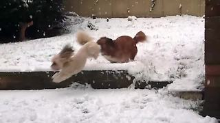 Adorable dogs play in snow-covered garden in Leeds - Video