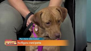 Hillsborough Pet Resources - Video