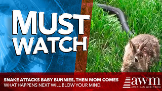Snake Tries Attacking Newborn Bunny. Now Wait Until You See Mom Teach Snake A Lesson - Video
