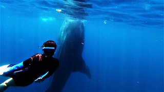 Swimmer Photo Bombs Beautiful Encounter With Whale Shark