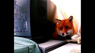 Fox Gets Its Own Apartment - Video