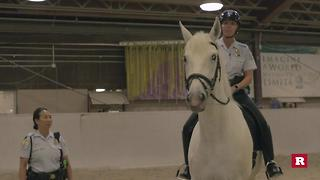 Behind-the-scene police horse training | Rare Animals - Video