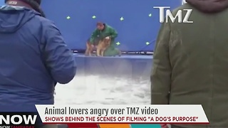 Animal lovers angry over TMZ video - Video