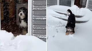 Puppy playing in the snow for first time will melt your heart