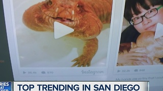 San Diegan couple's pet lizard is a viral sensation - Video