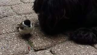 Dog and bird share incredibly unique friendship