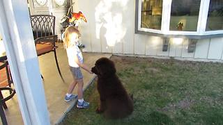 How to negotiate with a puppy! - Video