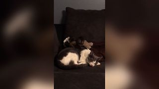 Small Monkey Tries To Wake Cat, Fails Adorably