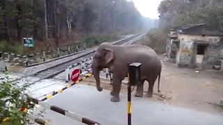 Watch What This Elephant Does When It Can't Cross The Road  - Video