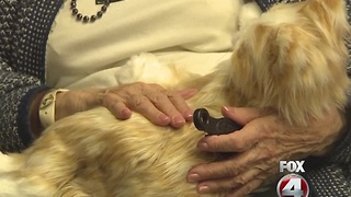 Nursing home uses robotic cats to soothe patients