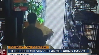 Parrot returned after theft caught on camera - Video