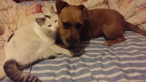 Dog and cat can't deny love for one another