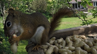 Adorable squirrel knocks over GoPro at birdfeeder - Video