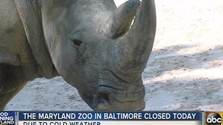 The Maryland Zoo in Baltimore closed Thursday due to cold weather - Video