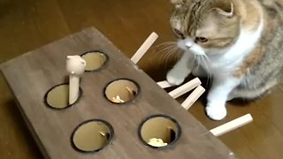 Cat plays homemade whack-a-mole game - Video