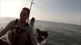 Baby seal gets a free ride on kayak - Video