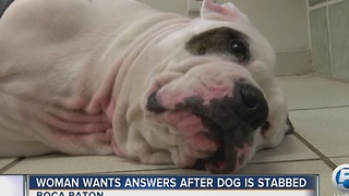 Woman wants answers after dog is stabbed