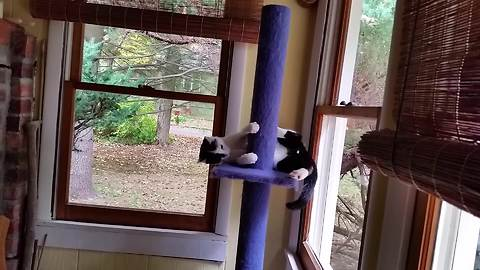 Cat invents new version of tail chasing game