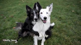 Dogs flawlessly pose for heart-melting photo session - Video
