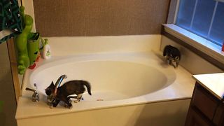 Kittens Find New Fun Use For Bathtub - Video