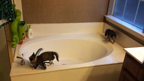 Kittens Find New Fun Use For Bathtub