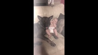 Baby spends precious moments with German Shepherd - Video