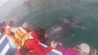 Cheeky Whale Gets Close to Boaters in Mexico