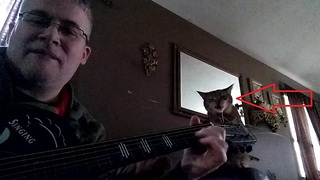 "Cat ""helps"" owner play guitar blues"