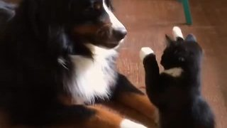 Ninja Kitten Uses Its Tiny Marshmallow Paws To Show Dog Who's The Boss