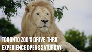 The Toronto Zoo's New Drive Thru-Experience Is Officially Opening This Saturday