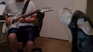 Dog sings the blues with guitar-playing owner - Video