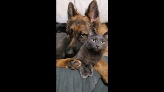 Dog And Cat Expertly Showcase Instagram Vs. Reality - Video