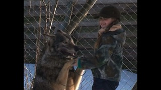 Mom and Daughter Adopt Orphaned Wolves - Video