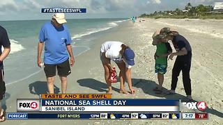 How to get the best seashells by the seashore - Video